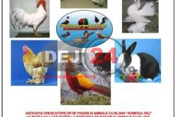 Expoziție de păsări și animele cu blană, la Dej
