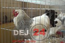 Ce-i așteaptă pe țăranii români. Impozitul pe vacă, porc sau găină