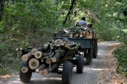 Polițiștii au acționat pe raza comunei Uriu pentru combaterea faptelor ce aduc atingere fondului forestier