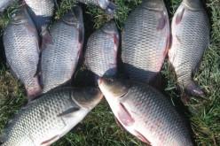 Pescarii din județul Cluj amenință Guvernul cu judecata. Lacurile sunt depopulate masiv