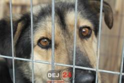 Campanie gratuită de sterilizare a câinilor la Dej