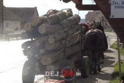 Polițiștii din Câțcău au identificat un transport ilicit de material lemnos