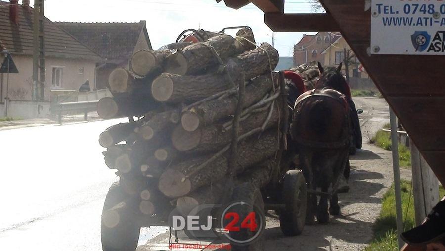 lemne cuzdrioara (1)