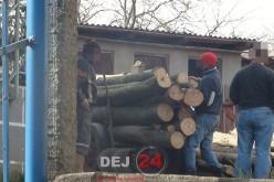 Tânăr depistat de polițiști transportând material lemnos, fără a îndeplini condițiile legale, pe raza comunei Panticeu