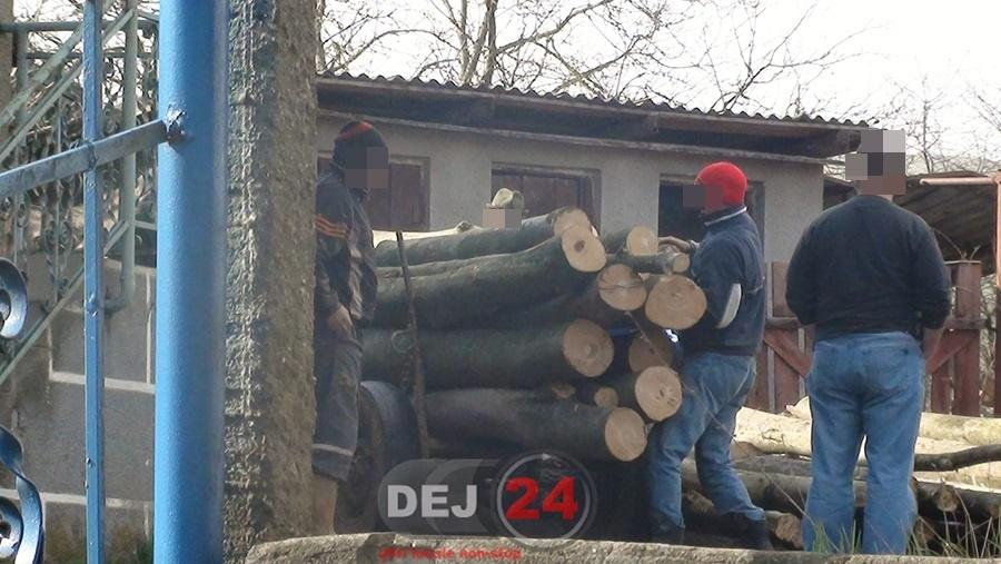 lemne cuzdrioara (4)