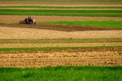 Ajutor pentru fermieri. Crescătorii de porcine vor primi bani de la Guvern