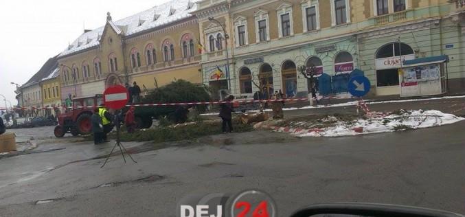 Bradul din centrul municipiului Dej a fost făcut una cu pământul – FOTO