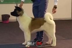 EXCLUSIV. Povestea lui HUGO, câinele din Dej desemnat recent BEST PUPPY – FOTO/VIDEO