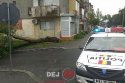 Furtună la Dej – Copac PRĂBUȘIT pe strada Ecaterina Teodoroiu – FOTO