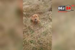 DEJ | Cățelușă accidentată și abandonată de un angajat al Primăriei! O asociație a depus plângere – FOTO/VIDEO
