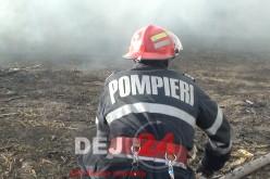 Pompierii din Ileanda au intervenit la un incendiu de vegetație