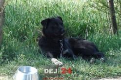 Și-a abandonat câinele la adăpostul din Dej. Asociația Anima Pro Terra va lua măsuri – FOTO/VIDEO