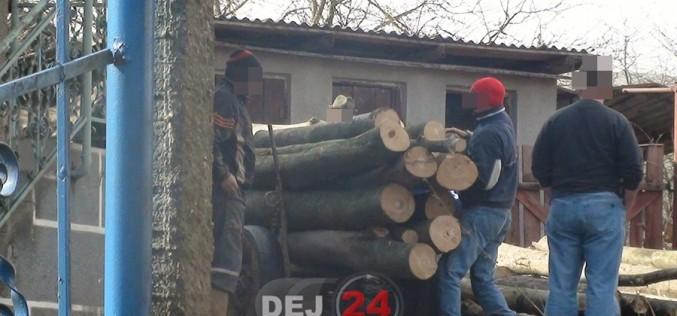 Două persoane, cercetate de polițiștii din Gherla pentru infracțiuni silvice