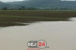 EXCLUSIV. Ploaia torențială a făcut prăpăd în culturile agricole din Vad – FOTO/VIDEO