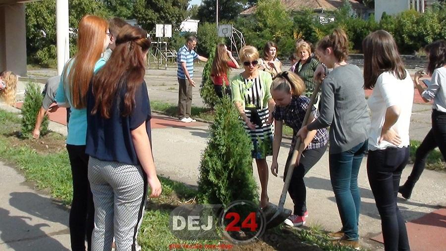 plantare copaci LAPI (5)
