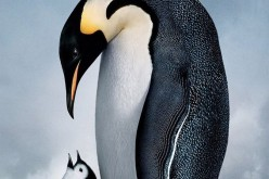 """Seară de film la sediul LTCOR Dej. Săptămâna aceasta """"March of the penguins"""""""