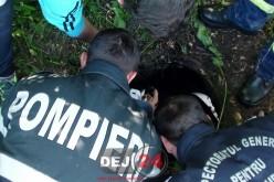 Misiune DRAMATICĂ pentru pompierii din Dej. Câine salvat dintr-un canal – FOTO/VIDEO