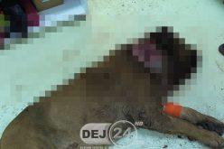 Dej | Câine găsit ÎMPUȘCAT în zona gâtului. Polițiștii au intrat pe fir – FOTO/VIDEO