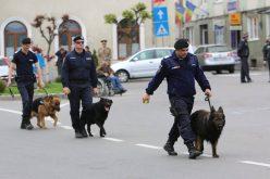 Cluj | Jandarmii vor folosi la Untold și la Electric Castle câini antrenați pentru depistarea drogurilor și a explozibililor