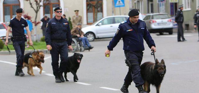 Cluj   Jandarmii vor folosi la Untold și la Electric Castle câini antrenați pentru depistarea drogurilor și a explozibililor
