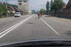 Vestul Sălbatic a ajuns la Dej! Cai nesupravegheați, lăsați liberi pe șosea – FOTO